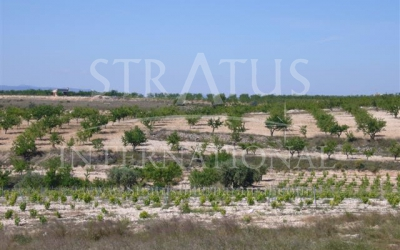 Land - For Sale - Pinoso - Rural location